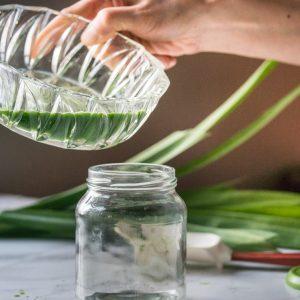Met een blender en vers of diepvries pandanblad maak je snel en makkelijk geurig pandan extract.